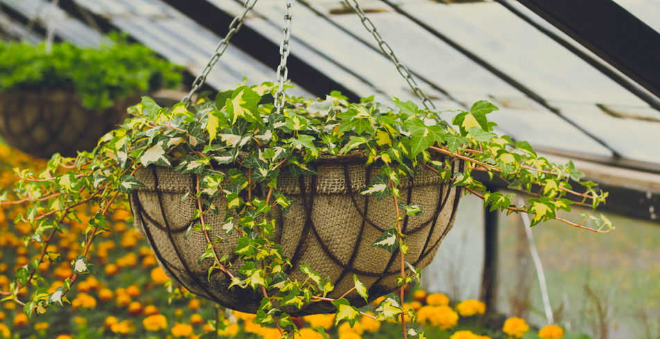 MAY3-stunning-hanging-baskets