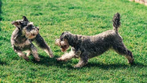 Dogs-smaller-image